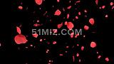 玫瑰花瓣飘落婚礼片头视频阿尔法通道素材