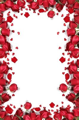 鮮花花瓣情侶人物七夕情人節玫瑰花浪漫