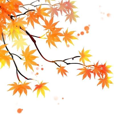 白露寒露24節氣楓葉手繪中國風水墨秋天楓樹葉植物樹枝素材