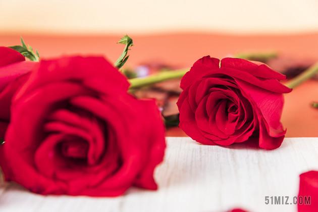 情人节玫瑰_情人节玫瑰花背景图片免费下载_觅知网