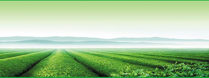 茶叶广告背景海报